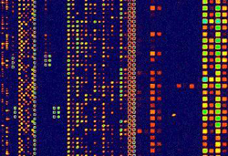 A closer look at that square on the gene chip - this is what the chip looks like under magnification when it's read by a computer.  The different colors indicate different gene results.
